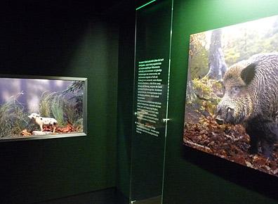 Ausstellungsgestaltung - Ausstellungsgestaltung-Naturkundemuseum-Wildschweine.jpg