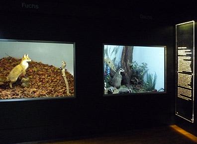 Ausstellungsgestaltung - Ausstellungsgestaltung-Naturkundemuseum.jpg